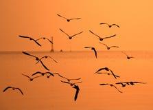 Segulls-Fliegen im goldenen Himmel Stockfotografie