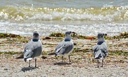 Segulls on the Shore Stock Image