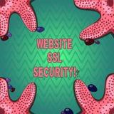 Segurança do SSL do Web site da escrita do texto da escrita Relação cifrada significado do conceito entre um servidor da web e um ilustração do vetor