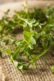 Segurelha verde orgânica crua Fotos de Stock Royalty Free