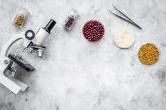 Seguridad alimentaria Trigo, arroz y habas rojas cerca del microscopio en copyspace gris de la opinión superior del fondo imagenes de archivo