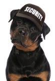 Seguridad de Rottweiler Fotos de archivo libres de regalías