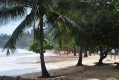 Sehen Sie das Meer durch die Bäume Stockfotos
