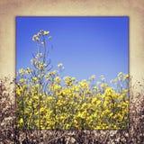 Sehen Sie den Himmel durch das grüne Gras mit gelben Blumen an Lizenzfreie Stockfotos