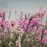 Sehen Sie den Himmel durch das grüne Gras mit rosa Blumen an Lizenzfreie Stockbilder