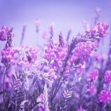 Sehen Sie den Himmel durch das grüne Gras mit rosa Blumen an Stockfotografie