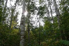Sehen Sie den Wald für die Bäume lizenzfreies stockbild
