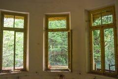 Sehen Sie den Wald vom Innenraum des verlassenen Krankenhauses an lizenzfreie stockbilder