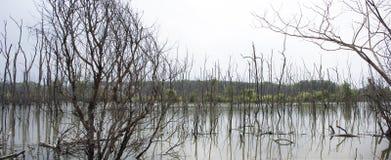 Sehen Sie die Landschaft von den Bäumen an, die tot und trocken im Schmutzwasserteich stehen Stockfotos