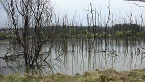 Sehen Sie die Landschaft von den Bäumen an, die tot und trocken im Schmutzwasserteich in Thailand stehen stock video footage