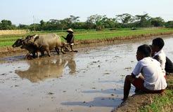 Sehen Sie die Verarbeitung von Reisfeldern Stockfotografie