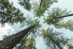 Sehen Sie Form unten von Bäumen im Berg - Hintergrundbeschaffenheitsgrün an lizenzfreies stockfoto