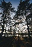 Sehen Sie Innere des Waldes auf den Bäumen an Lizenzfreies Stockbild