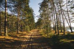 Sehen Sie Innere des Waldes auf den Bäumen an Lizenzfreie Stockbilder