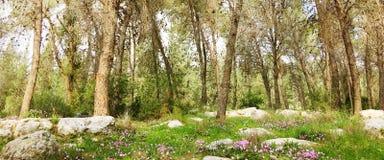 Sehen Sie Innere des Waldes auf den Bäumen an Bäume wachsen mitten in dem Wald Stockbild