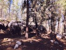 Sehen Sie Innere des Waldes auf den Bäumen an Bäume wachsen mitten in dem Wald Lizenzfreies Stockbild