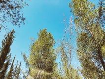 Sehen Sie Innere des Waldes auf den Bäumen an Bäume wachsen mitten in dem Wald Stockfoto