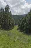 Sehen Sie in Richtung zum Sportzentrum im Kiefernwald an Stockfotos