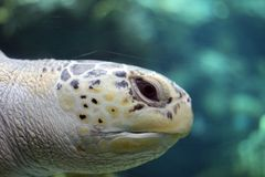 Sehen Sie Schildkröte lizenzfreie stockfotos