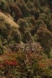 Sehen Sie von den roten Blumen auf den Bäumen u. dem x28; India& x29; Lizenzfreies Stockbild