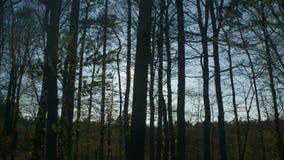 Sehen Sie von einem beweglichen Autofenster an, das durch Bäume schauen und von der Sonne, die über sie einstellt