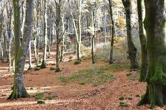 sehen Sie Weg im Holz an, das durch Blätter bedeckt wird stockfoto