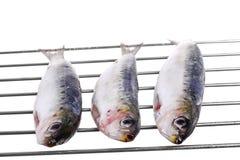 Sehr frische Sardinen auf einem Grill getrennt lizenzfreie stockbilder