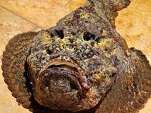 sehr gefährliches Unterwasserannimal für Menschen, adriatisches Nordmeer Lizenzfreie Stockfotos