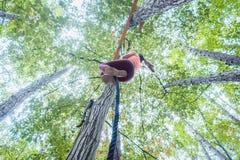 Sehr gepaßte und athletische Frau, die ein Seil klettert Lizenzfreies Stockfoto