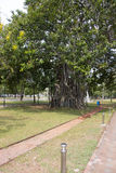 Sehr große Bäume stockfotos