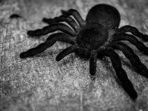 Sehr große Spinne stockfotografie