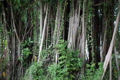Sehr großer Baum Stockfoto