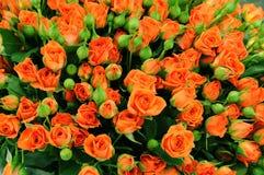 Sehr großer Blumenstrauß der blühenden Rosen Lizenzfreies Stockfoto