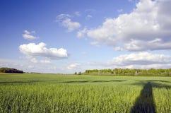 Sehr großer grüner Wiesen- und Baumschatten. Bewölkter blauer Himmel Lizenzfreies Stockbild