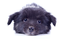 Sehr guter Hund Lizenzfreies Stockfoto