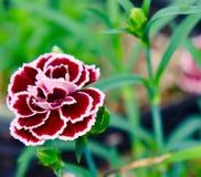 Sehr hübsche Blume Stockfotos