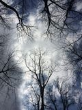 Sehr hohe Bäume Stockfotos