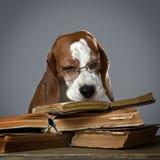 Sehr intelligenter Hund Lizenzfreie Stockfotografie