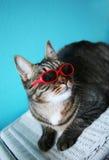 Sehr kühle Katze lizenzfreie stockbilder