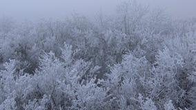 Sehr kalter Tag im Wald in Ungarn stock footage