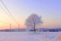 Sehr kalter Wintermorgen in Litauen, ungefähr - 24 Grad kalt 2016-01-08 Stockfotografie