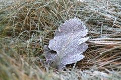 Sehr kaltes Blatt in der Winterzeit Stockbilder