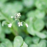 Sehr kleine wilde Blume Stockfotos