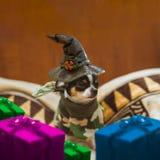 Sehr kleiner Welpe, der den Hut sitzt und die Geschenkboxen einer Hexe um ihn traurig, tragend Glückliche Halloween-Postkarte Lizenzfreies Stockfoto