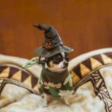 Sehr kleiner Welpe, der traurig sitzt und den Hut einer Hexe trägt Glückliche Halloween-Postkarte Stockbilder