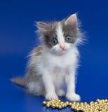 Sehr kleines Kätzchen schaut bewundern Stockbild
