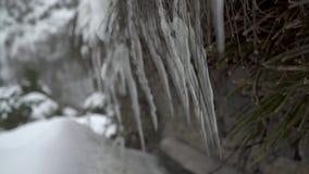 Sehr nah herauf Ansicht von Eiszapfen des Eises mit fallendem Schnee stock video footage
