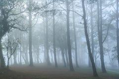 Sehr nebelig im Wald Lizenzfreie Stockfotos