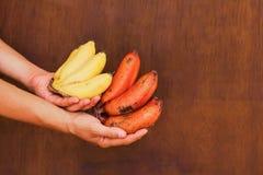 Sehr neues Bananenbündel in den Händen Lizenzfreie Stockbilder