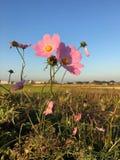 sehr reizende Blume Lizenzfreies Stockfoto